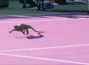Tenis Kortunda, Karşılaşmayı Durduran O Hayvan!