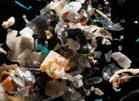 İnsanlar tarafından tüketilenler de dahil olmak üzere birçok balık türü plastik yiyor!